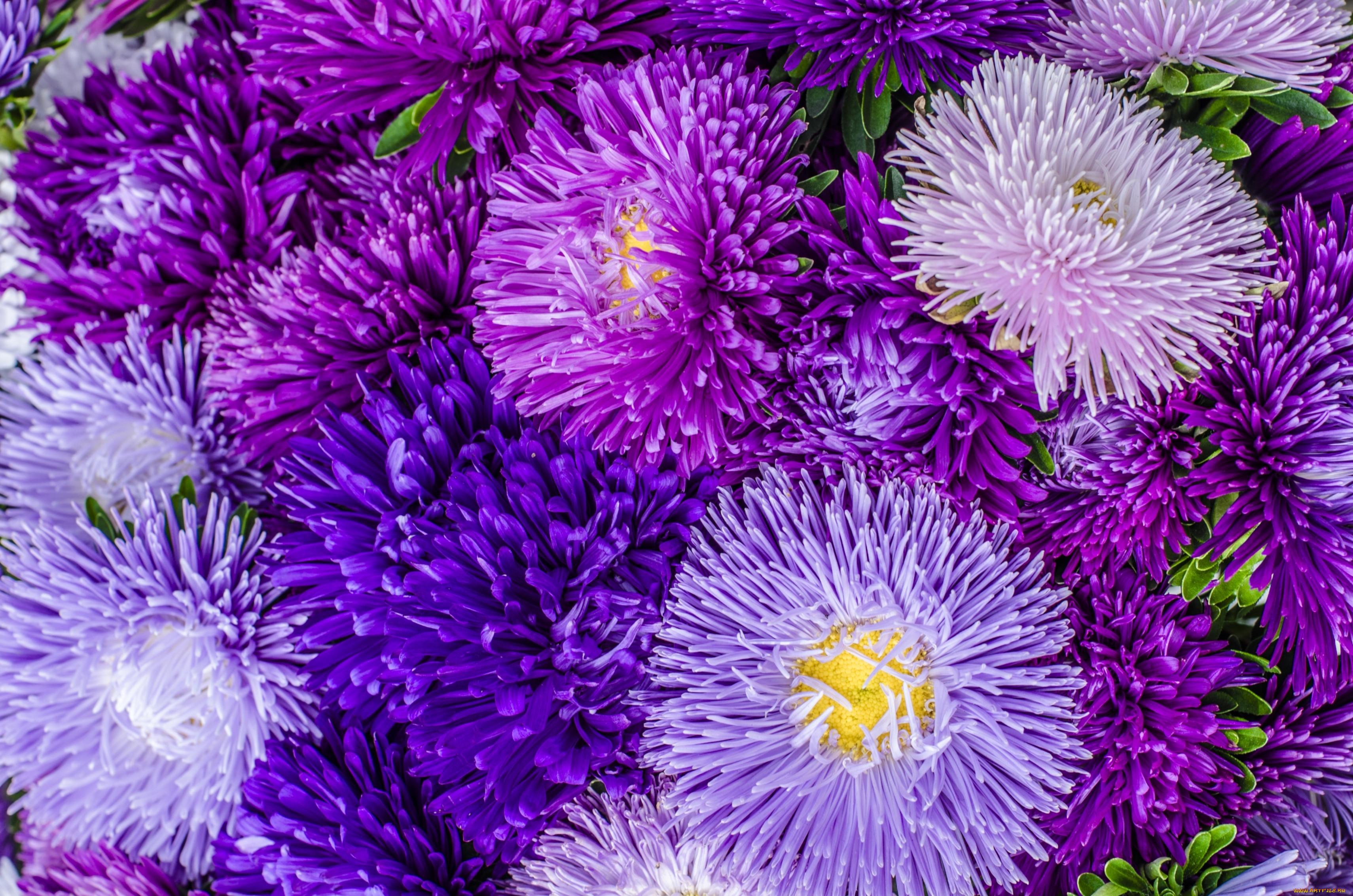 когда картинки на телефон красивые осенние цветы давайте узнаем